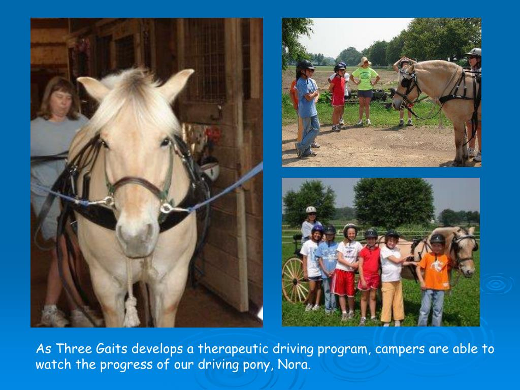 As Three Gaits develops a therapeutic driving program, campers are able to watch the progress of our driving pony, Nora.