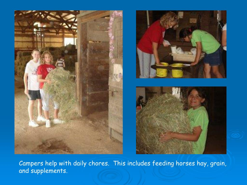 Campers help with daily chores.  This includes feeding horses hay, grain, and supplements.