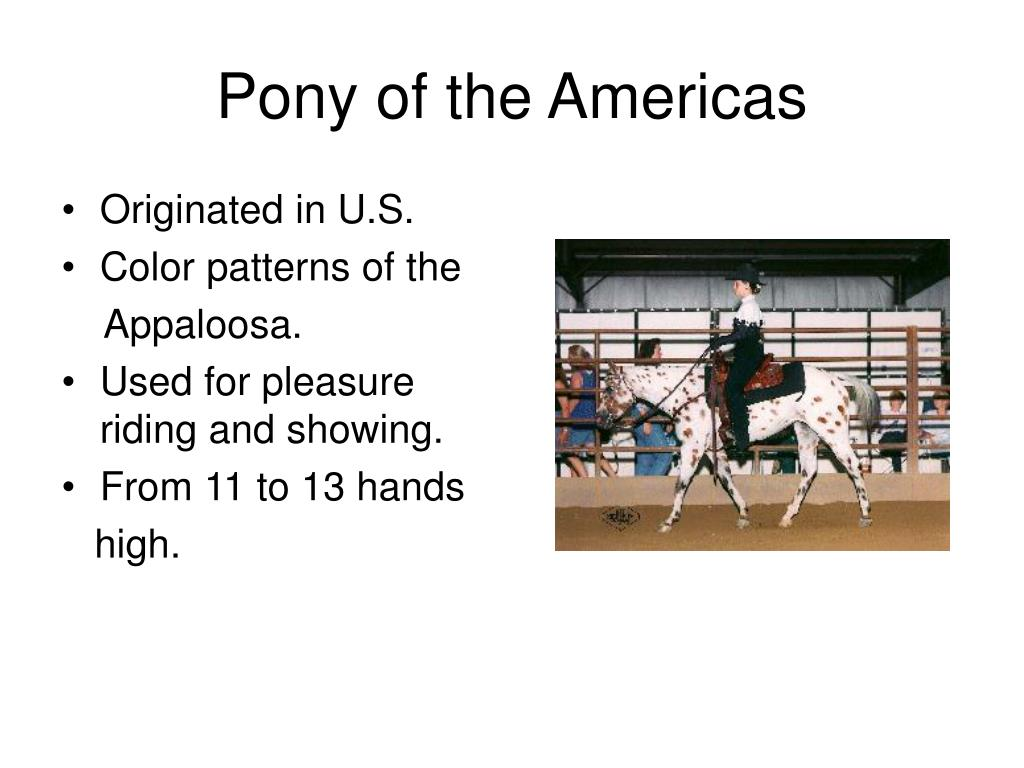 Pony of the Americas