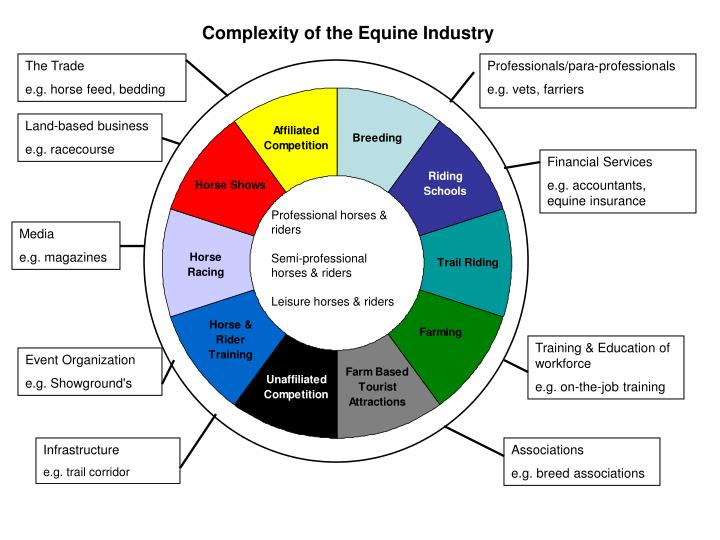 Complexity of the Equine Industry