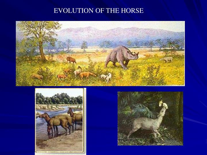 EVOLUTION OF THE HORSE