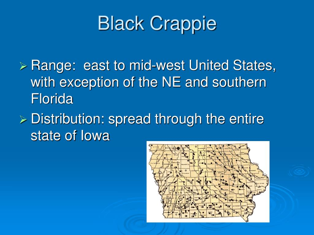 Black Crappie