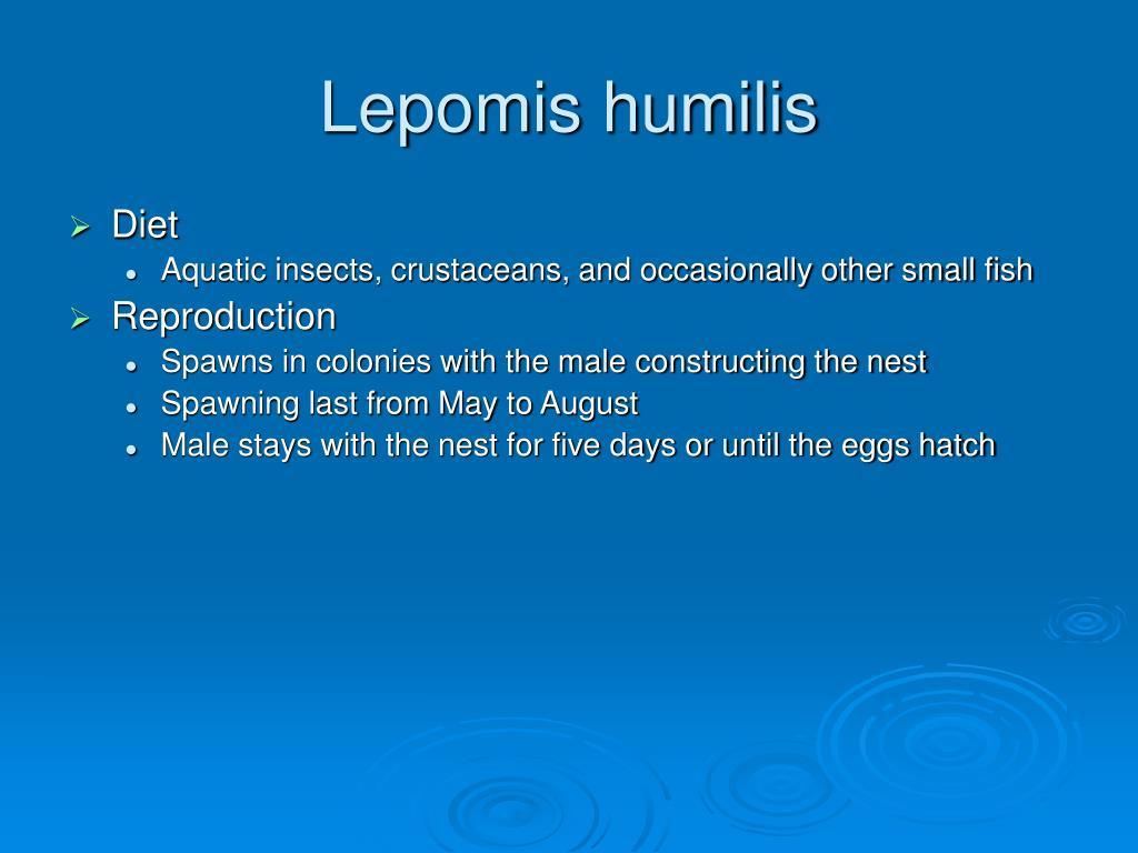 Lepomis humilis