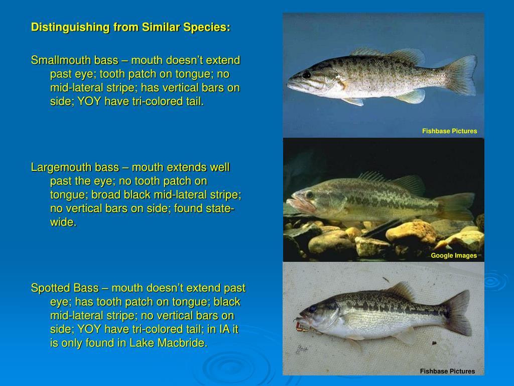 Distinguishing from Similar Species: