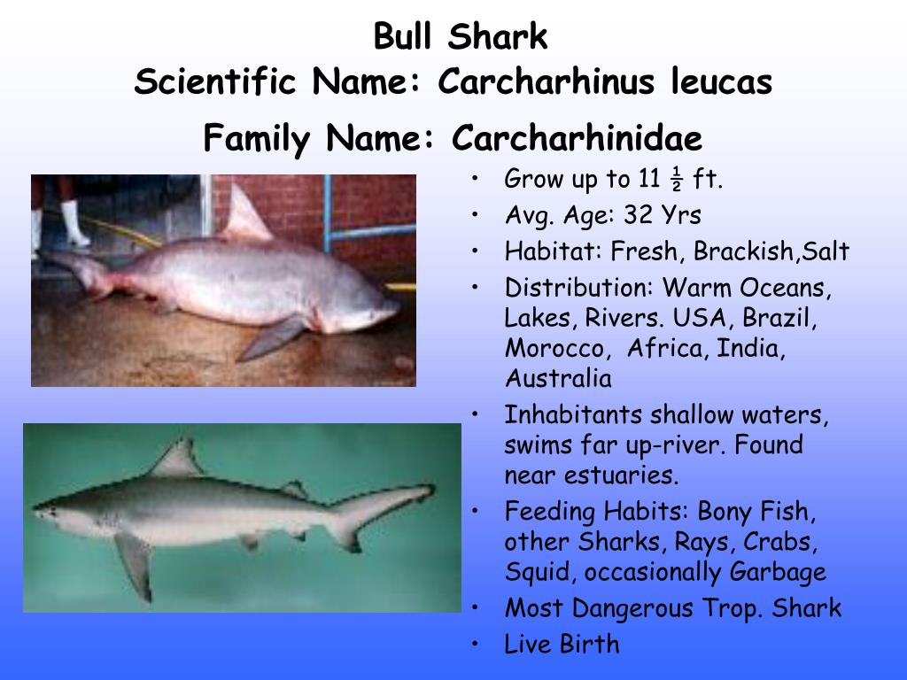 ppt freshwater fish powerpoint presentation id 202398