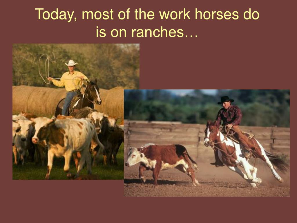 Today, most of the work horses do