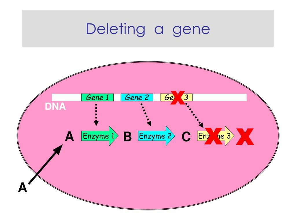 Deleting  a  gene