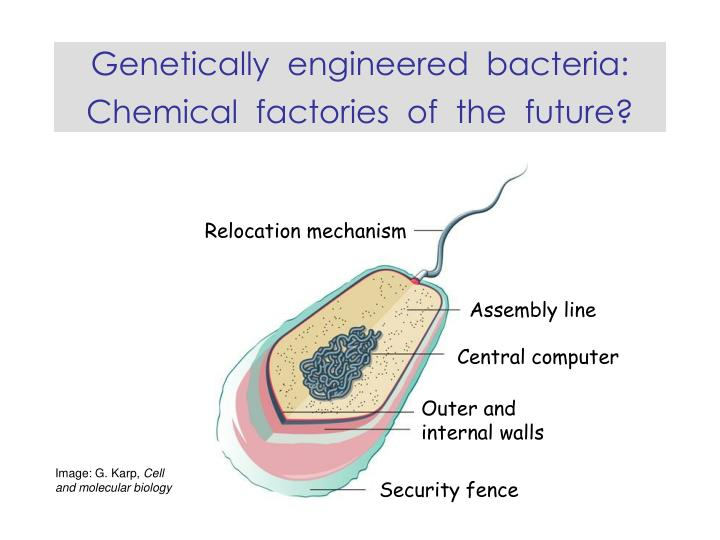 Genetically engineered bacteria chemical factories of the future l.jpg