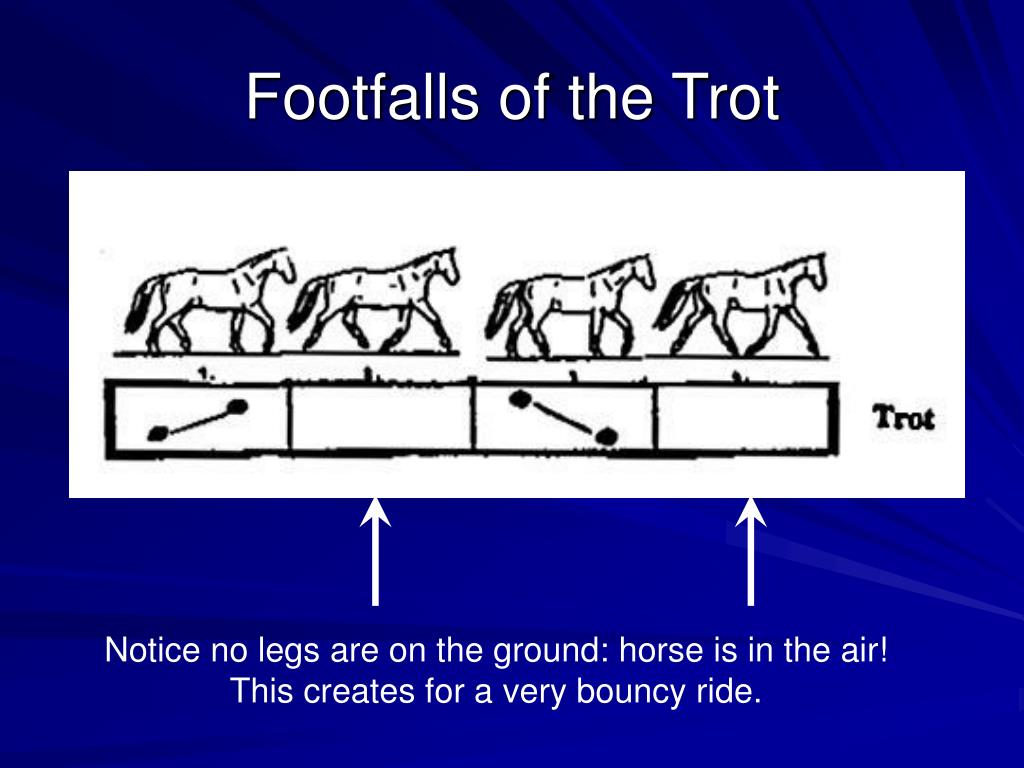 Footfalls of the Trot
