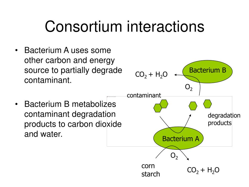 Ppt Microorganisms And Organic Pollutants Powerpoint