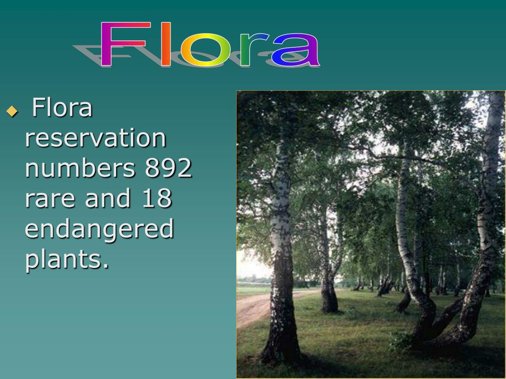 Flora reservation numbers 892 rare and 18 endangered plants.
