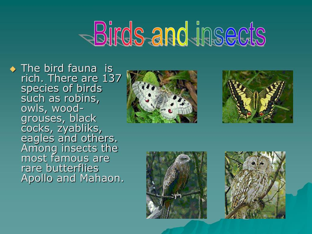The bird fauna  is rich. There are 137 species of birds such as robins, owls, wood-grouses, black cocks, zyabliks, eagles and others. Among insects the most famous are rare butterflies Apollo