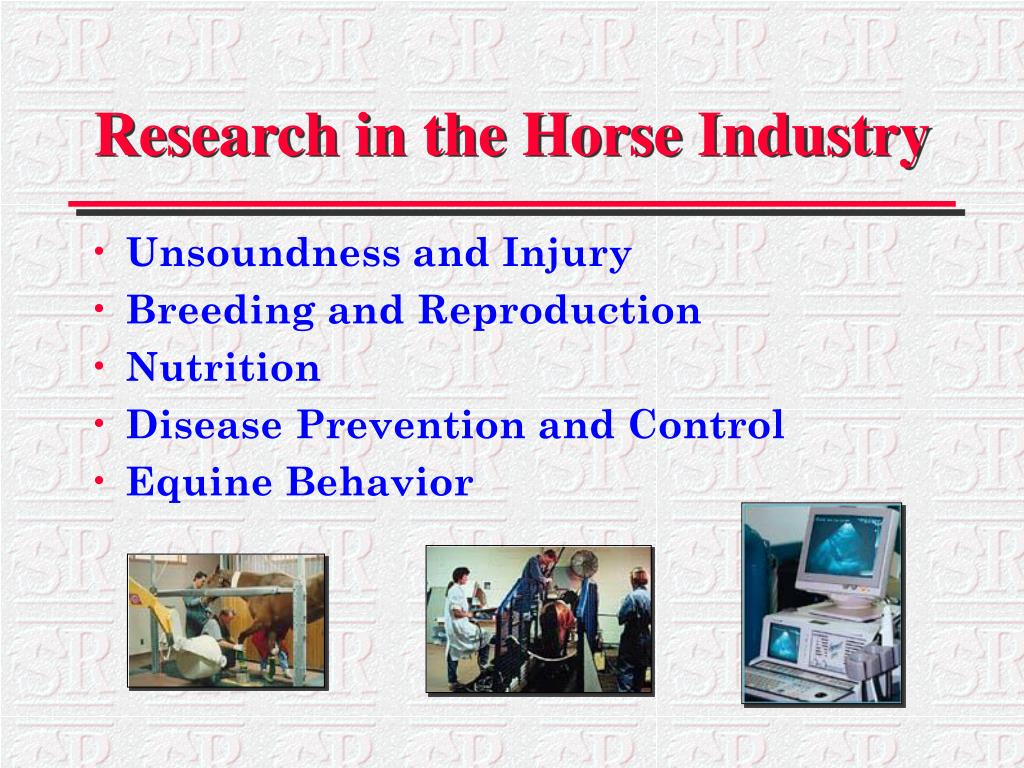 Research in the Horse Industry