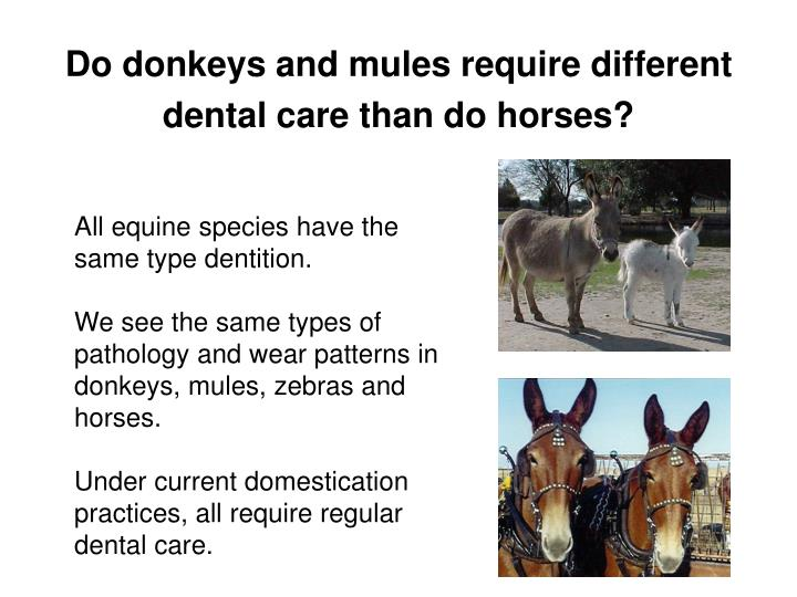Do donkeys and mules require different dental care than do horses?