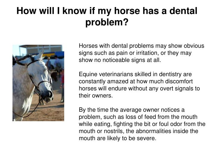 How will I know if my horse has a dental problem?