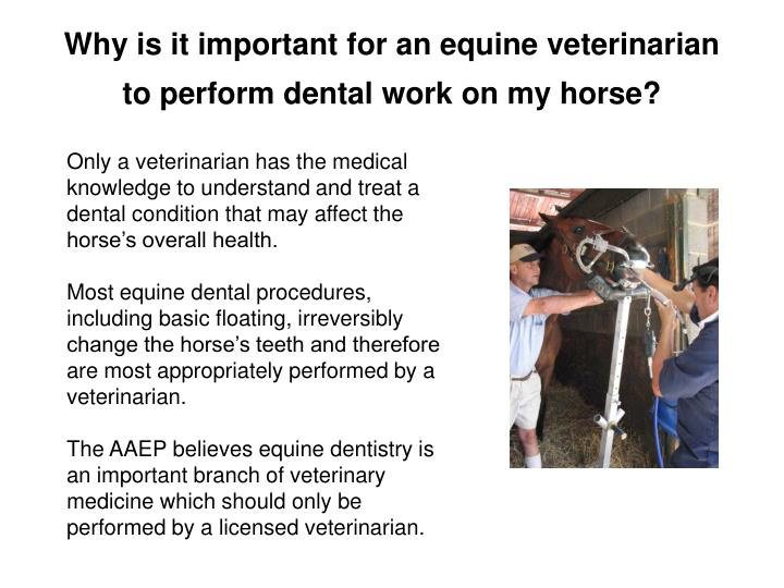 Why is it important for an equine veterinarian to perform dental work on my horse?