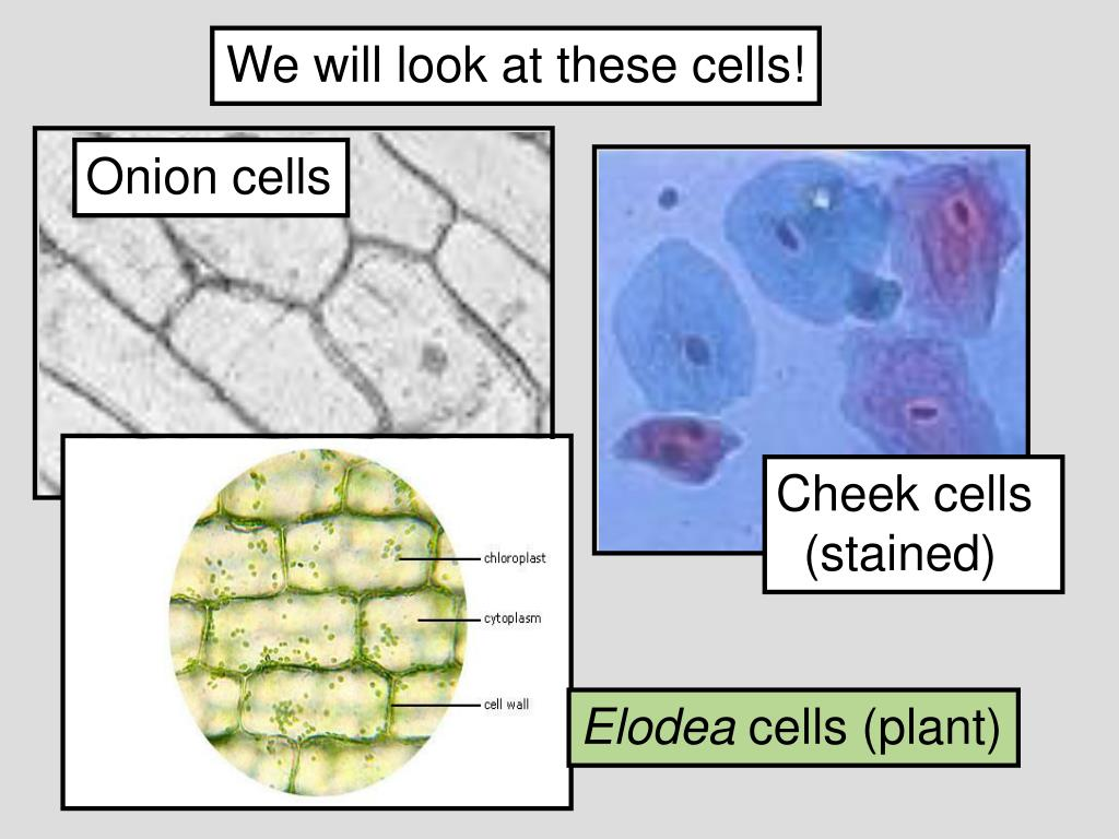 We will look at these cells!