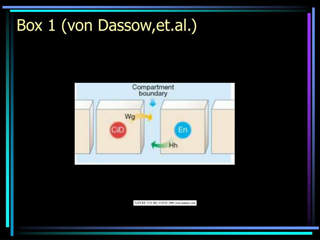Box 1 (von Dassow,et.al.)
