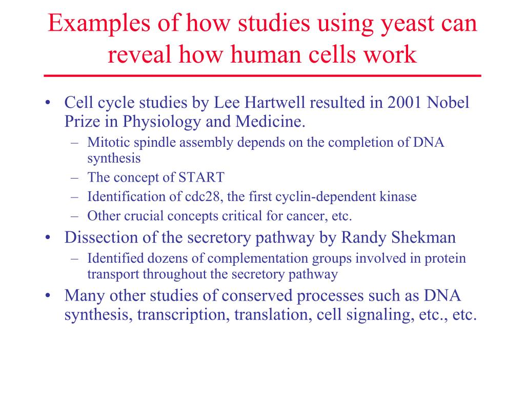 Examples of how studies using yeast can reveal how human cells work