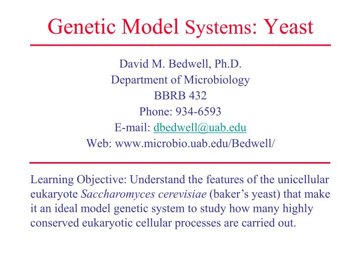 Genetic model systems yeast l.jpg