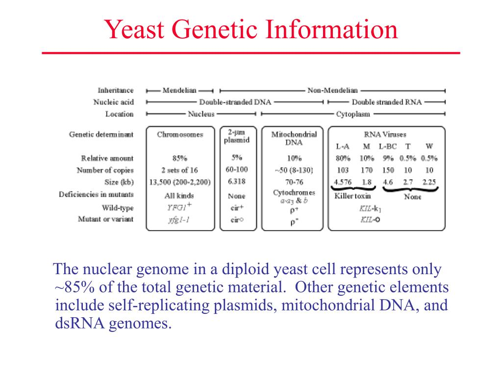 Yeast Genetic Information
