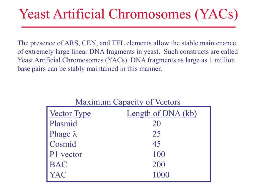 Yeast Artificial Chromosomes (YACs)