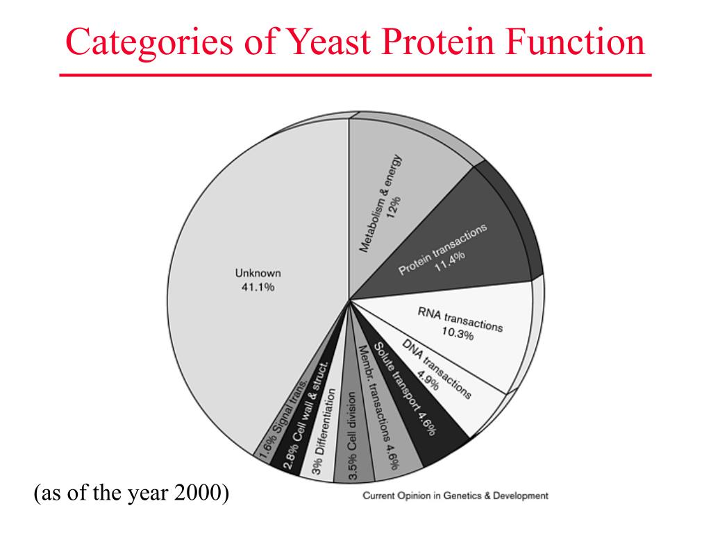 Categories of Yeast Protein Function