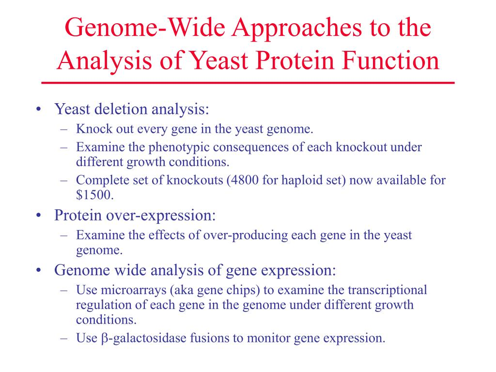 Genome-Wide Approaches to the Analysis of Yeast Protein Function