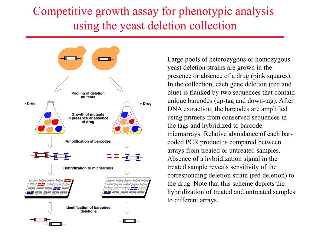Competitive growth assay for phenotypic analysis