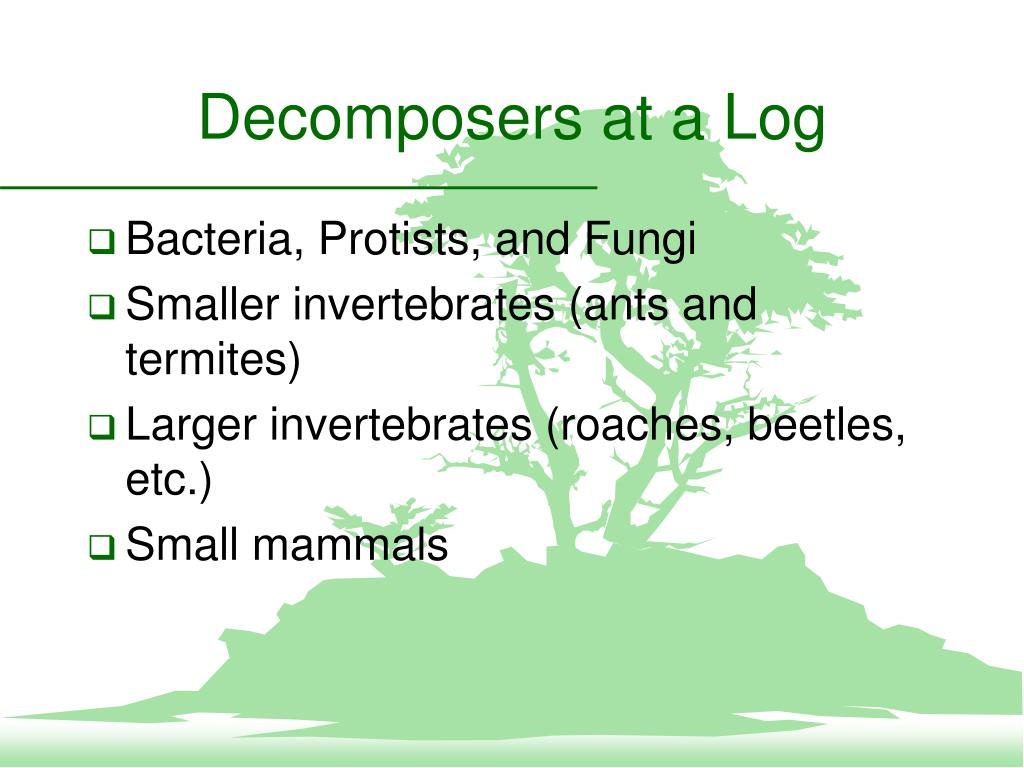 Decomposers at a Log