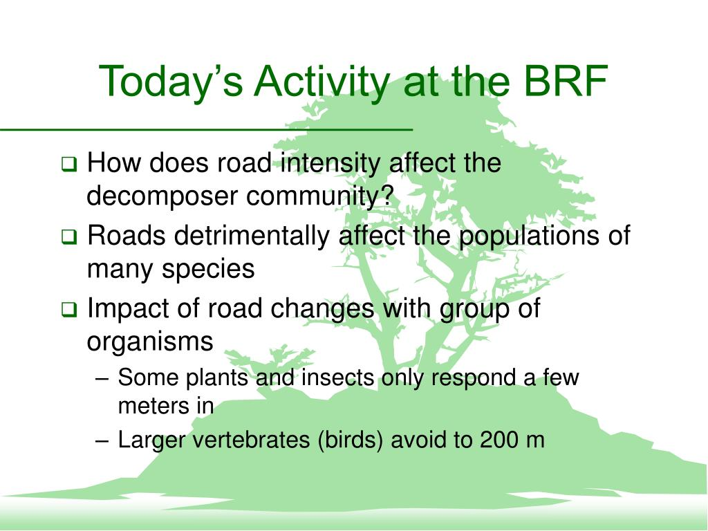 Today's Activity at the BRF