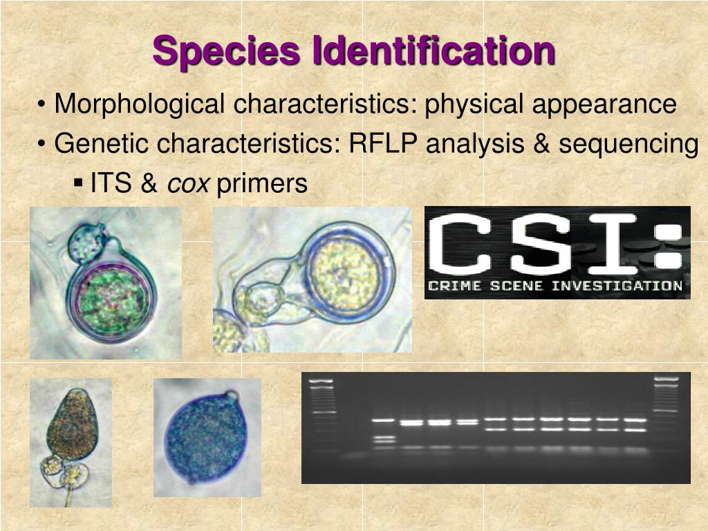 Species Identification