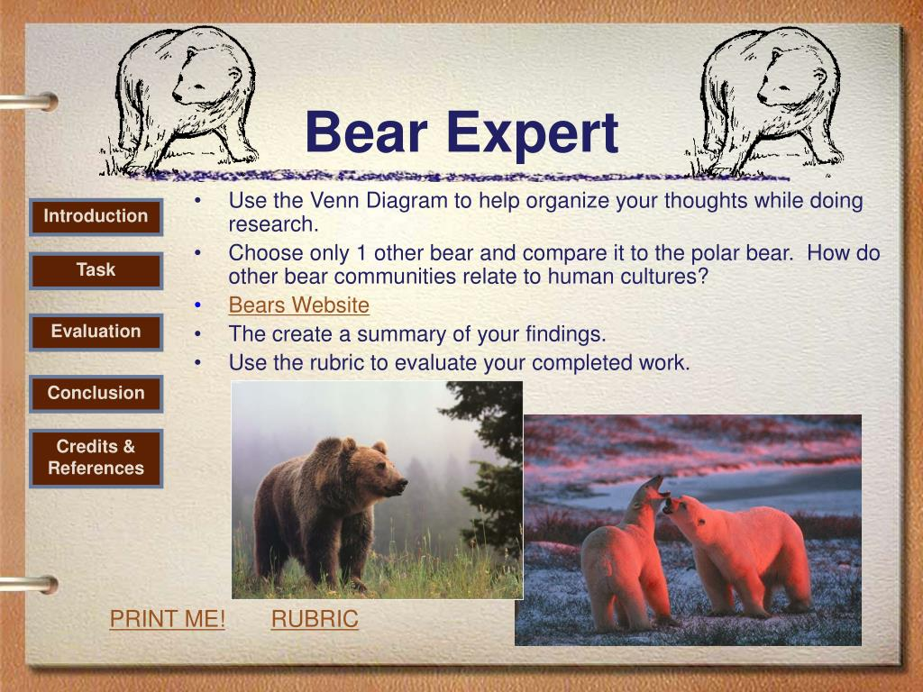 Bear Expert