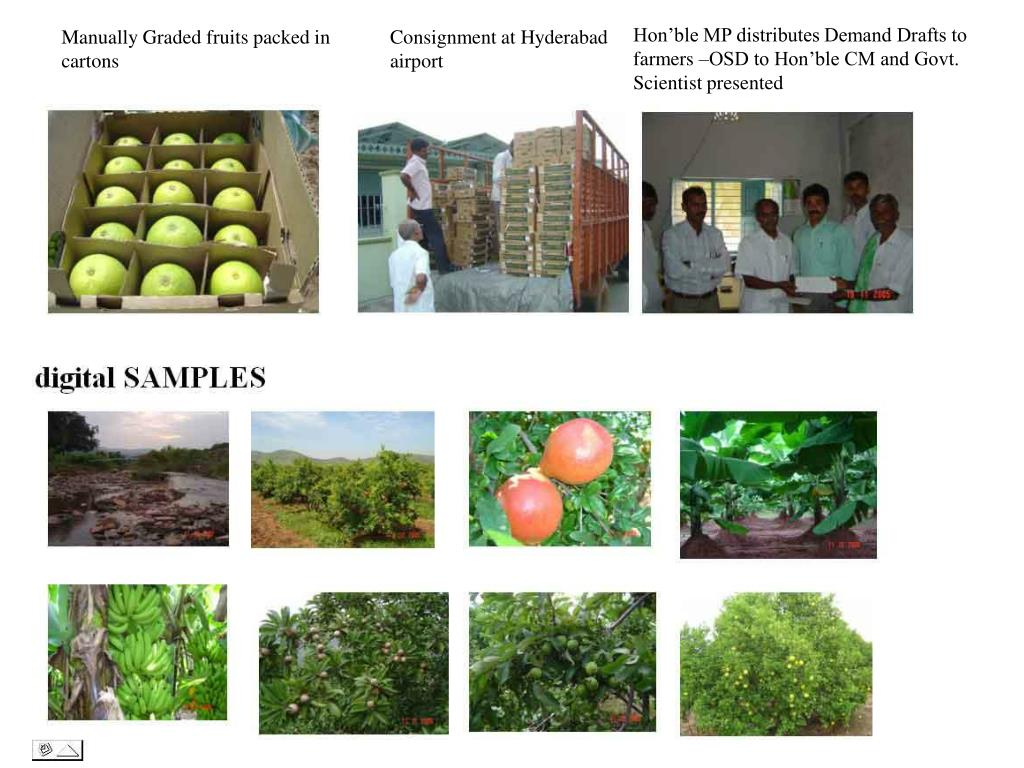 Hon'ble MP distributes Demand Drafts to farmers –OSD to Hon'ble CM and Govt. Scientist presented
