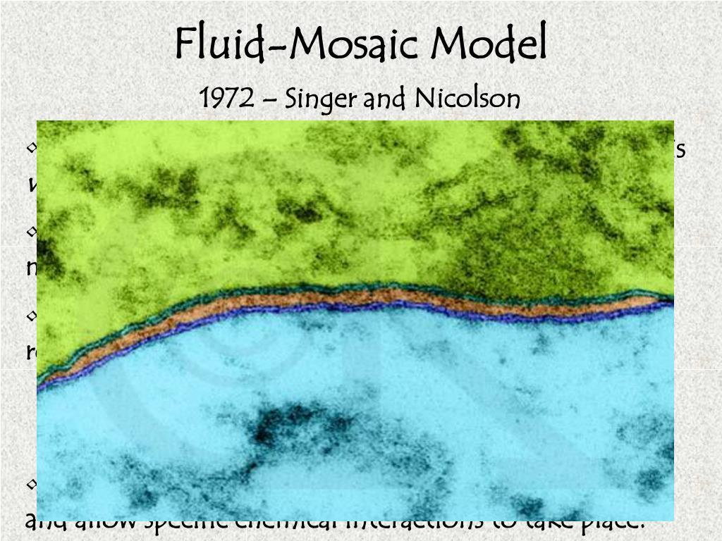 Fluid-Mosaic Model