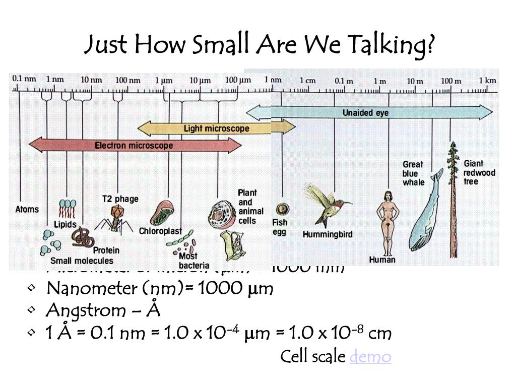 Just How Small Are We Talking?