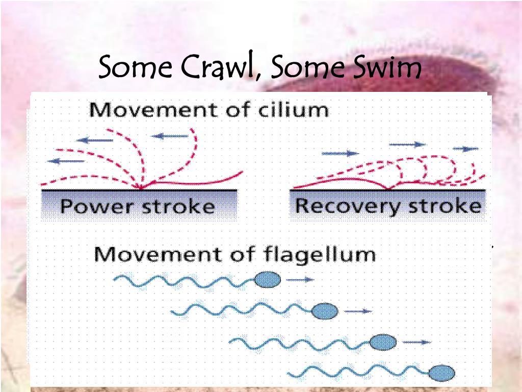 Some Crawl, Some Swim