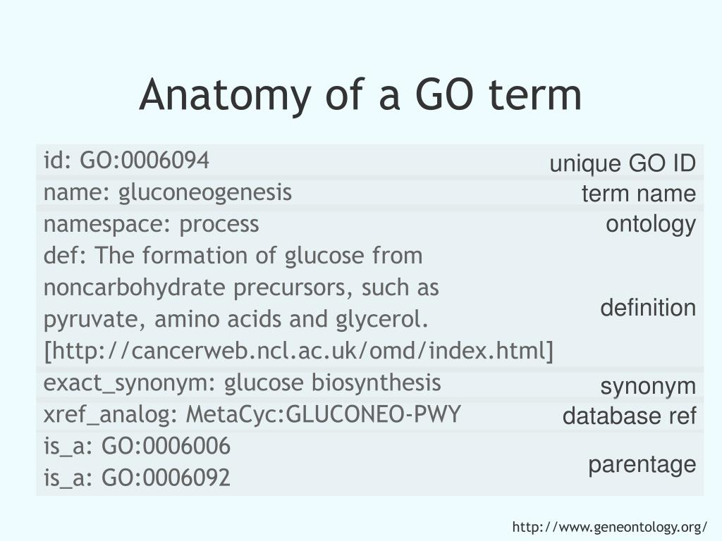 Anatomy of a GO term