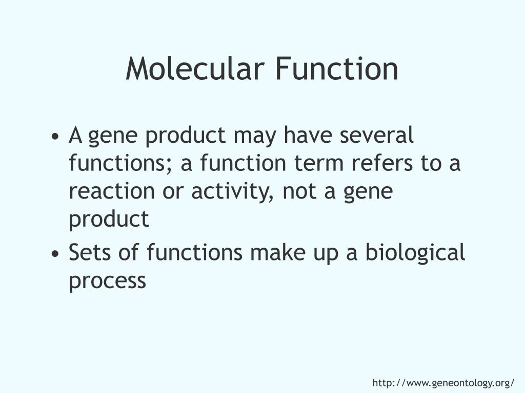 Molecular Function