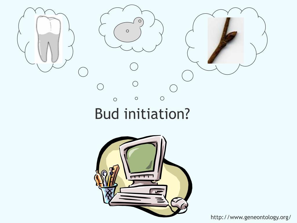 Bud initiation?