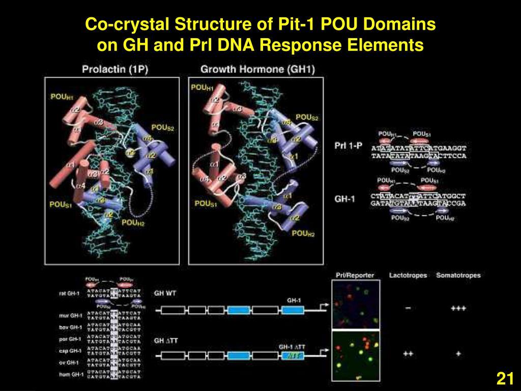 Co-crystal Structure of Pit-1 POU Domains