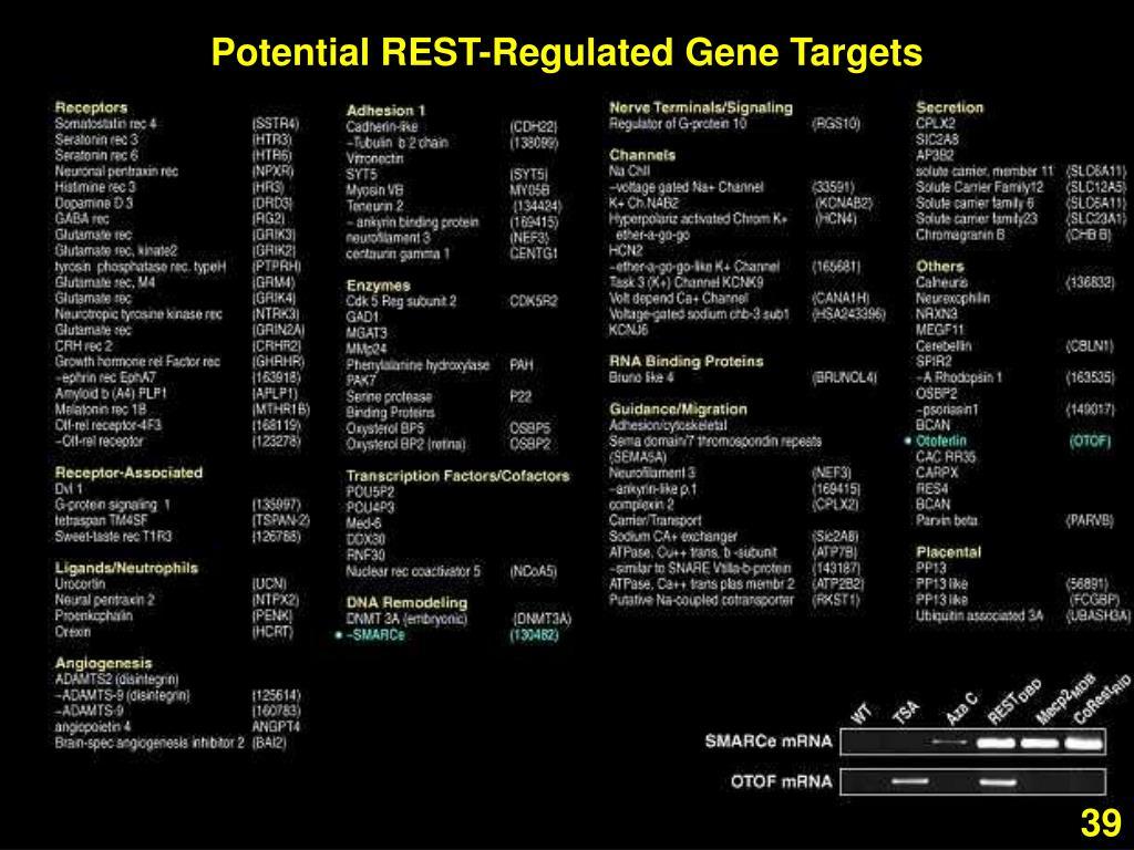 Potential REST-Regulated Gene Targets