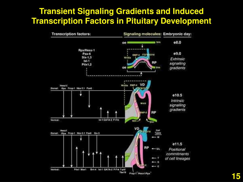 Transient Signaling Gradients and Induced