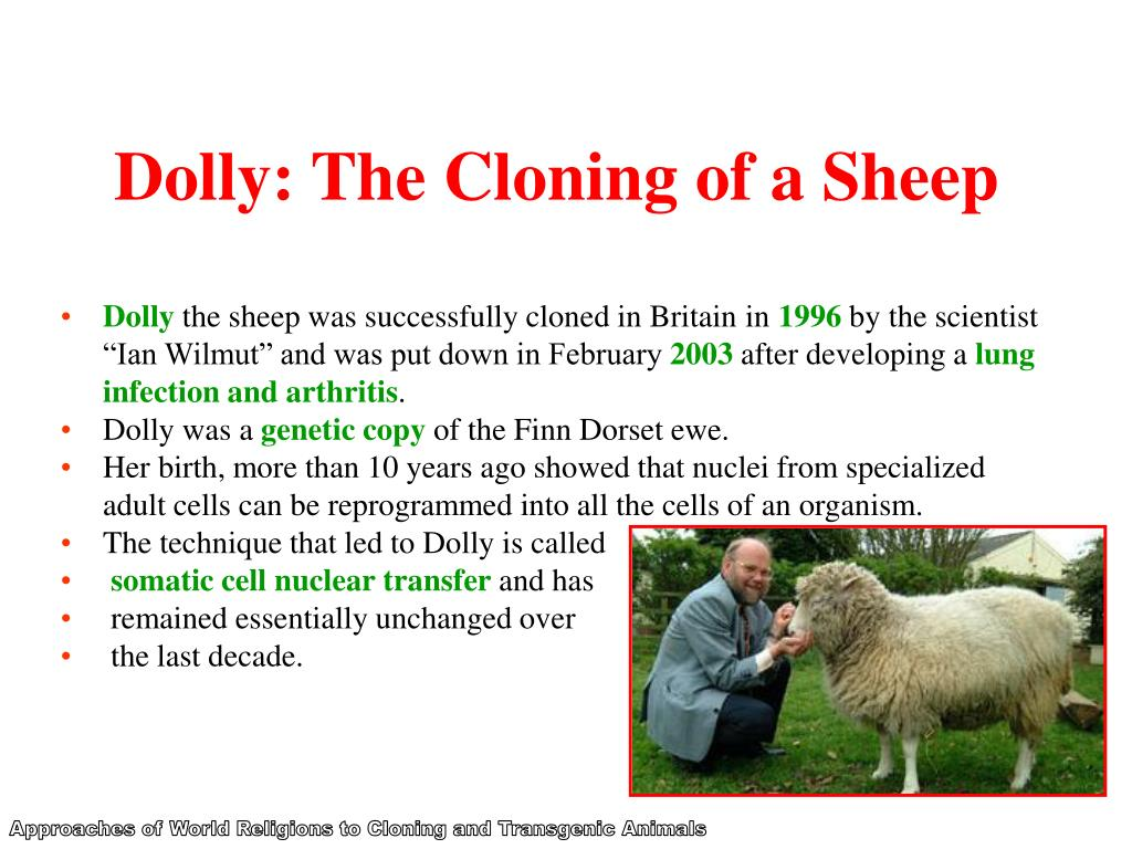 Dolly: The Cloning of a Sheep