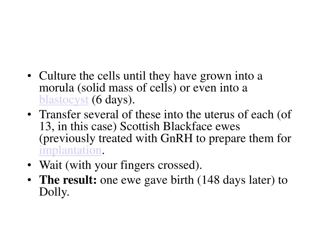 Culture the cells until they have grown into a morula (solid mass of cells) or even into a