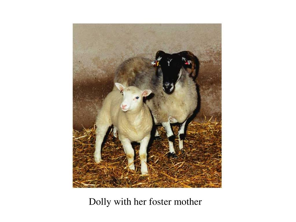 Dolly with her foster mother