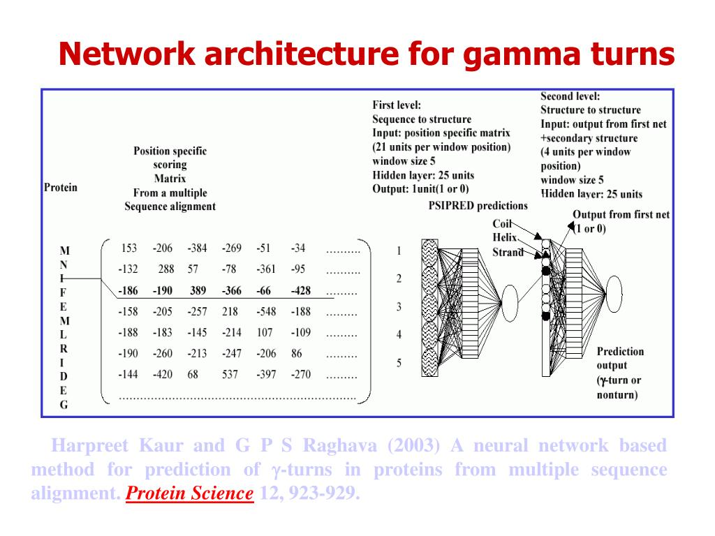 Network architecture for gamma turns