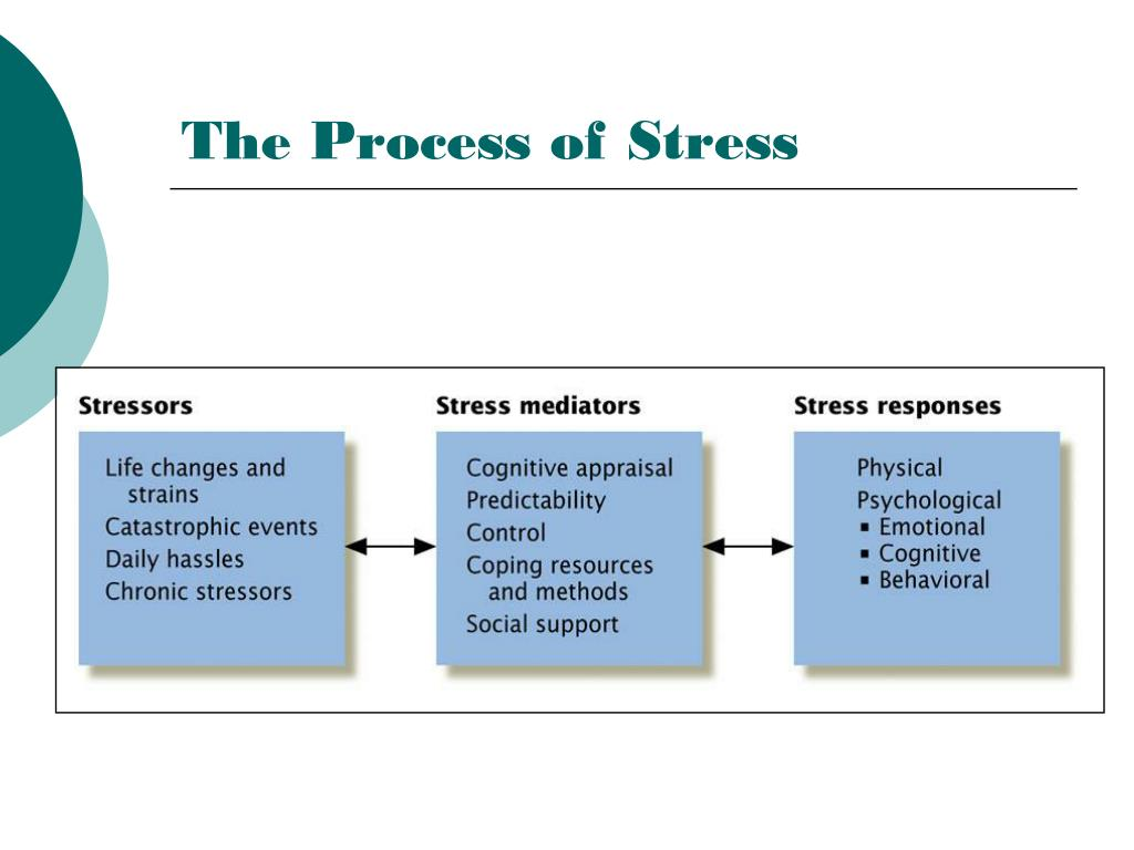 The Process of Stress