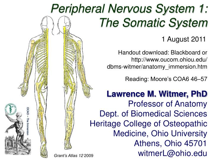 Peripheral Nervous System 1: