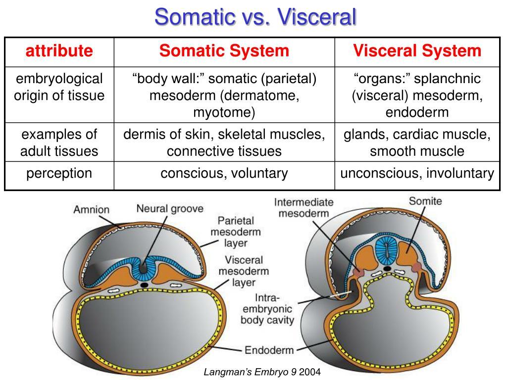 Somatic vs. Visceral